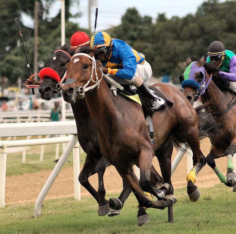 走る馬と選手